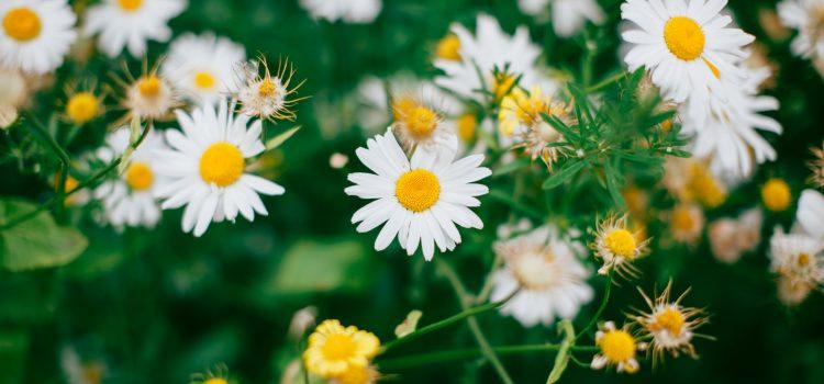 Grow Wild: Free Seed Kits
